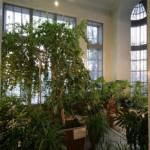 Зимний сад в особняке М. Ф. Кшесинской
